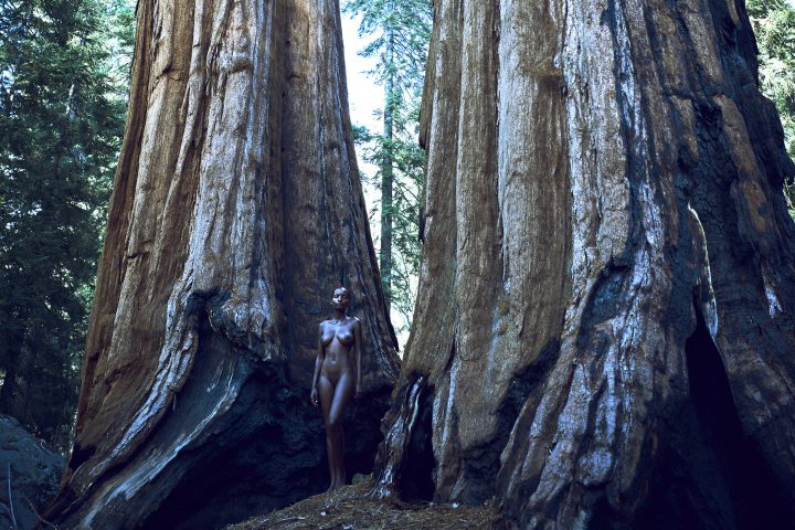 naked girls between 2 sequoia trees by stefan rappo